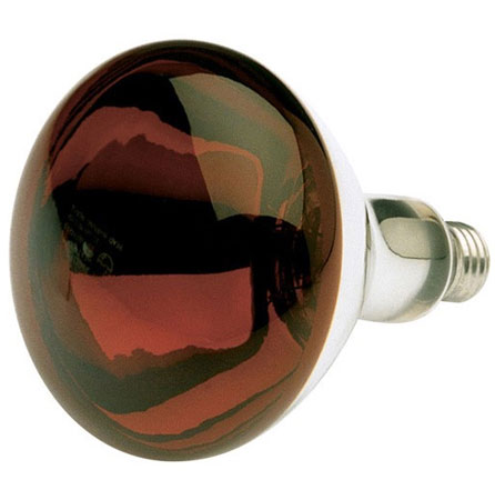 Light Bulbs: Heat Lamps, Clear & Infrared