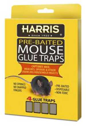 Mouse Trap Glue 4 Pack